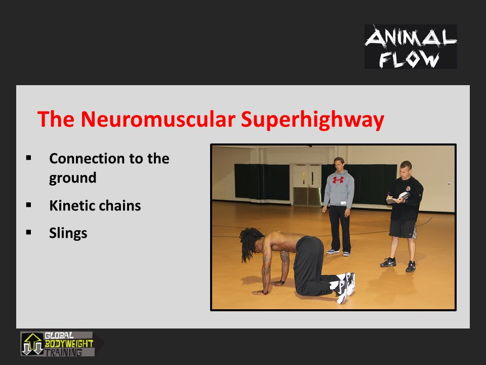 The Neuromuscular Superhighway  Connection to the ground  Kinetic chains  Slings