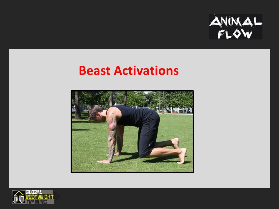 Traveling Forms The ABCs of Animal Movements  Crawling into dynamic stabilization