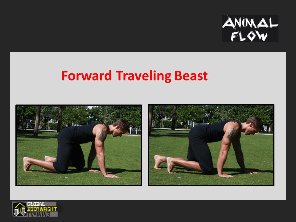 Switches and Transitions  Movement Windows  Conditioning  Integration into strength programs