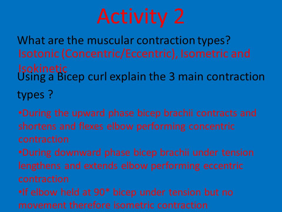 Activity 2 What are the muscular contraction types.