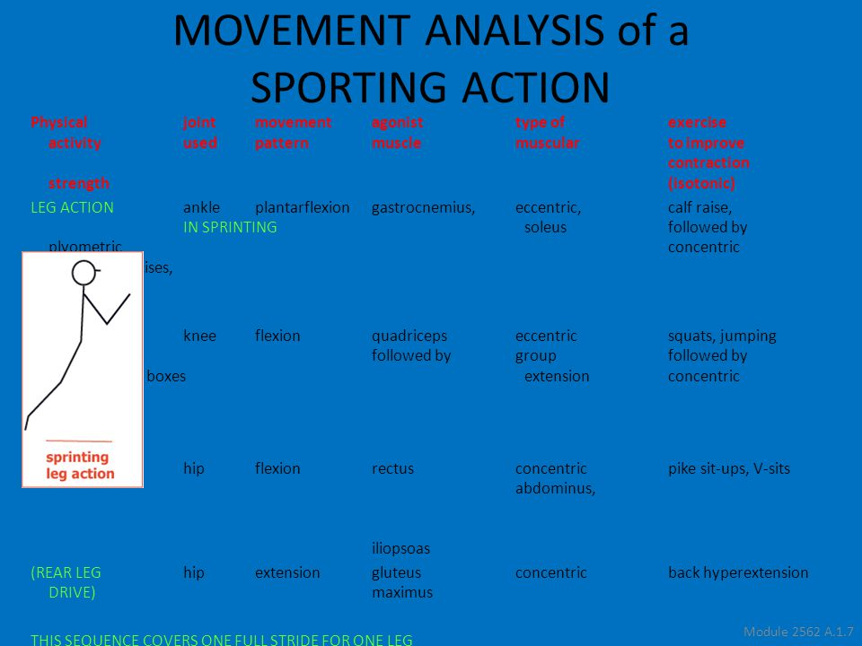 Module 2562 A.1.7 Physicaljointmovementagonisttype ofexercise activityusedpatternmusclemuscularto improve contraction strength(isotonic) LEG ACTIONankleplantarflexiongastrocnemius,eccentric,calf raise, IN SPRINTINGsoleus followed by plyometric concentric jumping exercises, hopping kneeflexion quadricepseccentricsquats, jumping followed bygroupfollowed by upwards onto boxesextensionconcentric (KNEE LIFT)hipflexionrectusconcentricpike sit-ups, V-sits abdominus, iliopsoas (REAR LEGhipextensiongluteus concentricback hyperextension DRIVE)maximus THIS SEQUENCE COVERS ONE FULL STRIDE FOR ONE LEG MOVEMENT ANALYSIS of a SPORTING ACTION