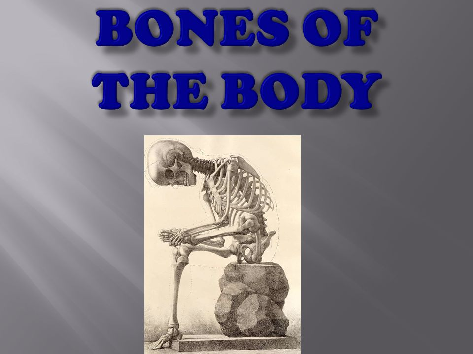 Fun Facts About Bones That You Should Know Babies have more bones than adults We have around 350 bones that we are born with.