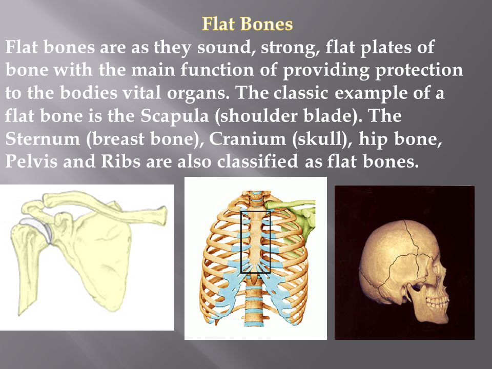 Irregular Bones These are bones in the body which do not fall into any other category, due to their non- uniform shape.