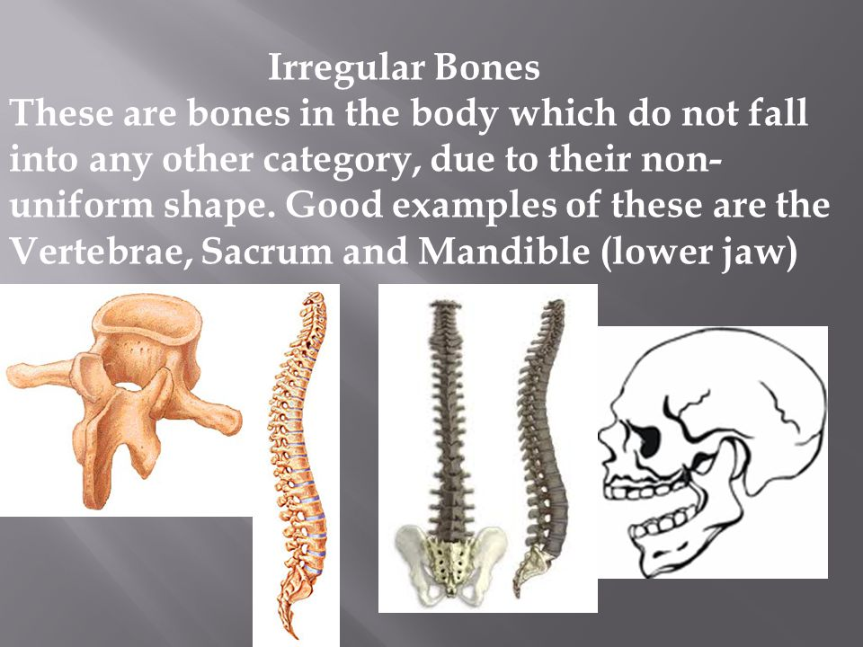 Irregular Bones These are bones in the body which do not fall into any other category, due to their non- uniform shape. Good examples of these are the