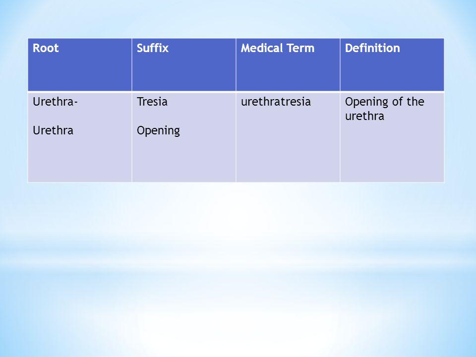 RootSuffixMedical TermDefinition Urethra- Urethra Tresia Opening urethratresiaOpening of the urethra