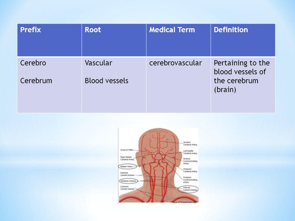 PrefixRootMedical TermDefinition Cerebro Cerebrum Vascular Blood vessels cerebrovascularPertaining to the blood vessels of the cerebrum (brain)