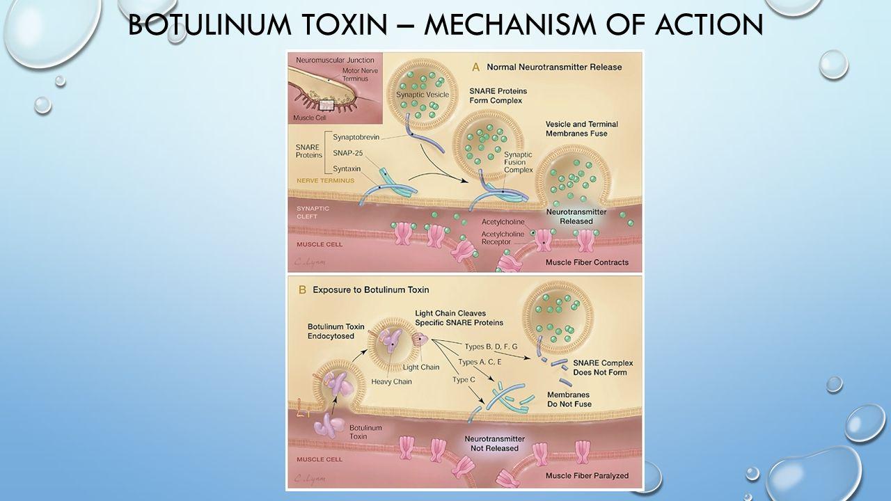 BOTULINUM TOXIN – MECHANISM OF ACTION