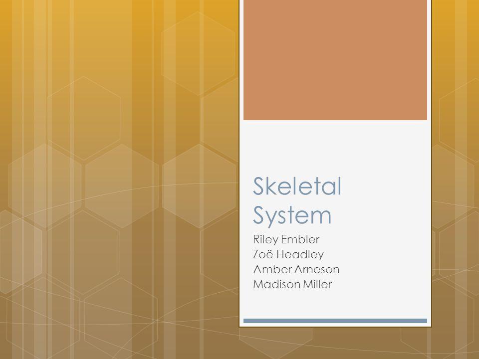 Skeletal System Riley Embler Zoë Headley Amber Arneson Madison Miller