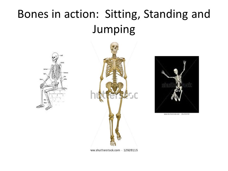 Bones in action: Sitting, Standing and Jumping