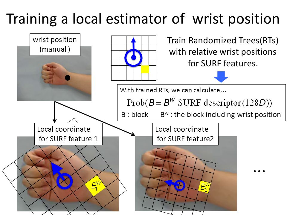 Training a local estimator of wrist position wrist position (manual ) Local coordinate for SURF feature 1 Local coordinate for SURF feature2 Train Randomized Trees(RTs) with relative wrist positions for SURF features.
