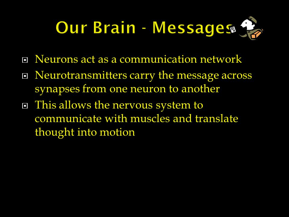 Neurons act as a communication network  Neurotransmitters carry the message across synapses from one neuron to another  This allows the nervous system to communicate with muscles and translate thought into motion