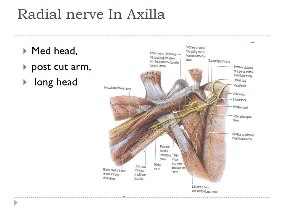 Radial nerve In Axilla  Med head,  post cut arm,  long head