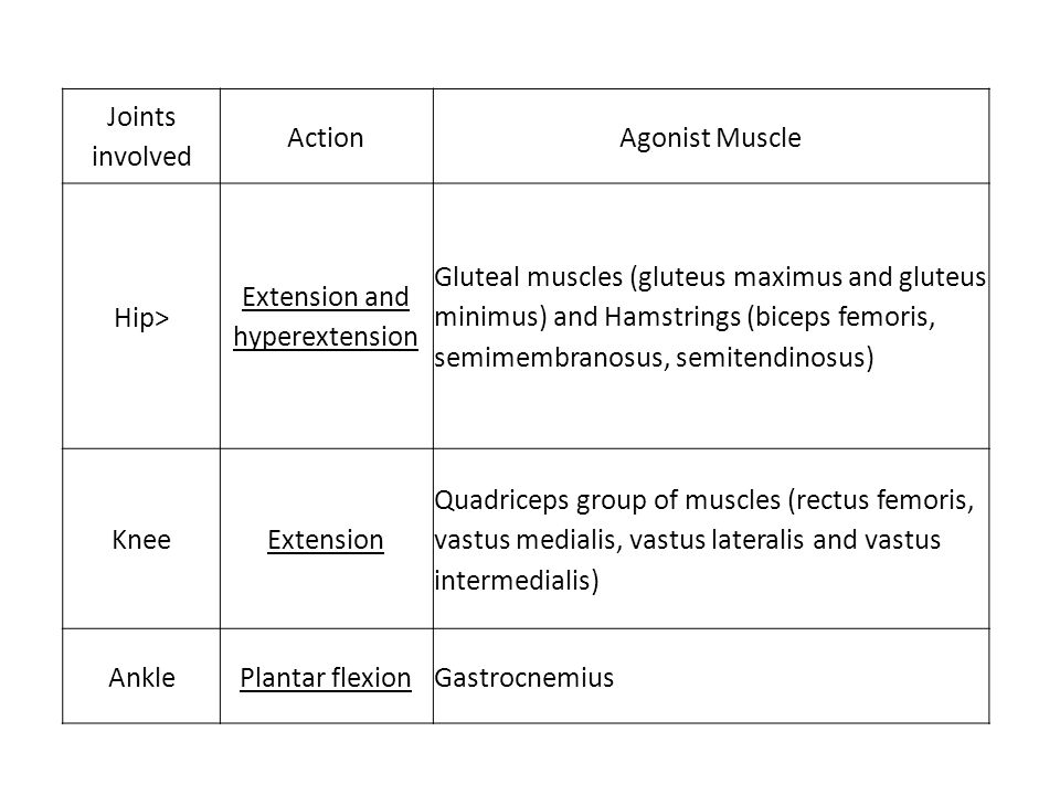 Joints involved ActionAgonist Muscle Hip> Extension and hyperextension Gluteal muscles (gluteus maximus and gluteus minimus) and Hamstrings (biceps fe