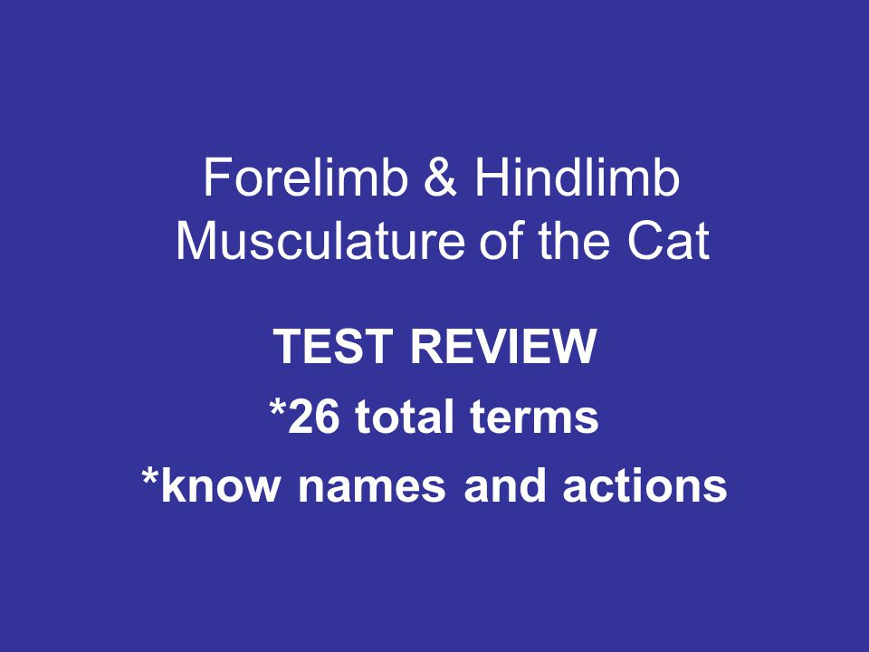 Forelimb & Hindlimb Musculature of the Cat TEST REVIEW *26 total terms *know names and actions
