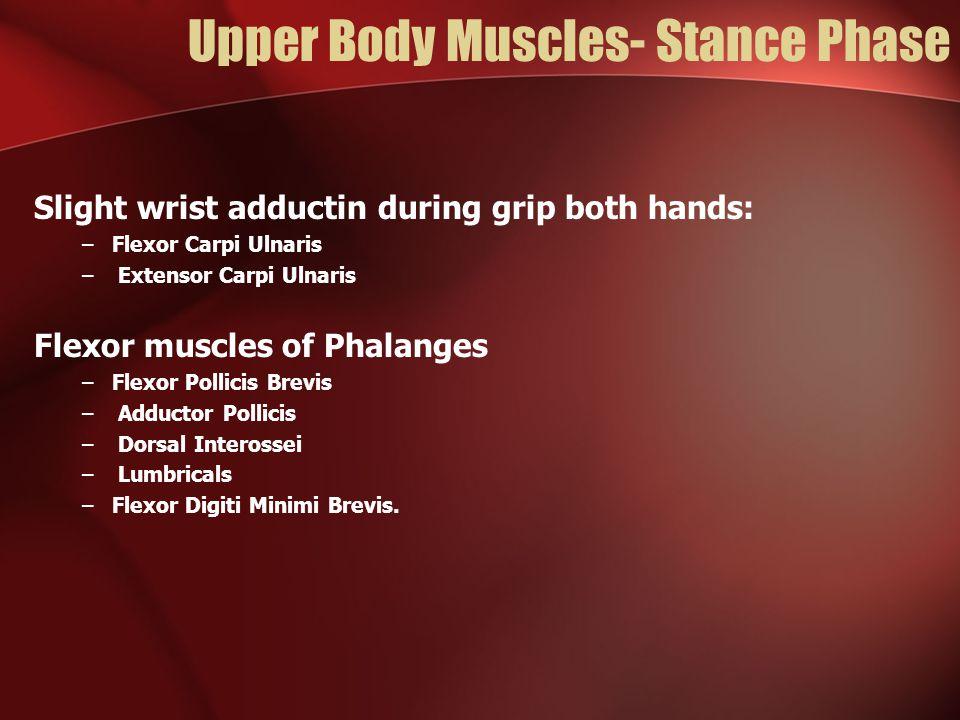 Upper Body Muscles- Stance Phase Slight wrist adductin during grip both hands: –Flexor Carpi Ulnaris – Extensor Carpi Ulnaris Flexor muscles of Phalanges –Flexor Pollicis Brevis – Adductor Pollicis – Dorsal Interossei – Lumbricals –Flexor Digiti Minimi Brevis.