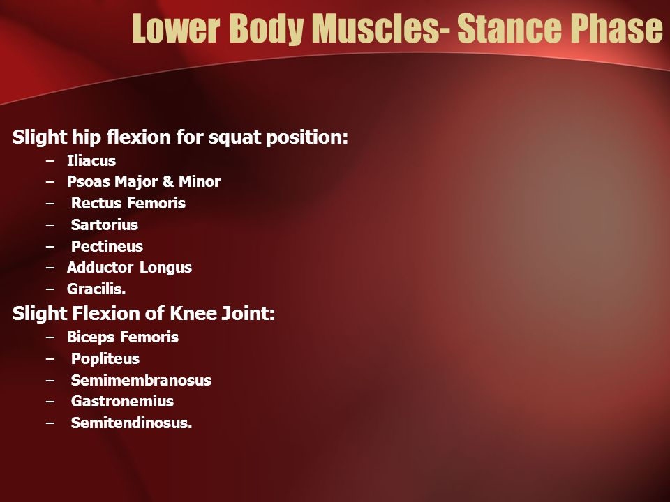 Lower Body Muscles- Stance Phase Slight hip flexion for squat position: –Iliacus –Psoas Major & Minor – Rectus Femoris – Sartorius – Pectineus –Adductor Longus –Gracilis.