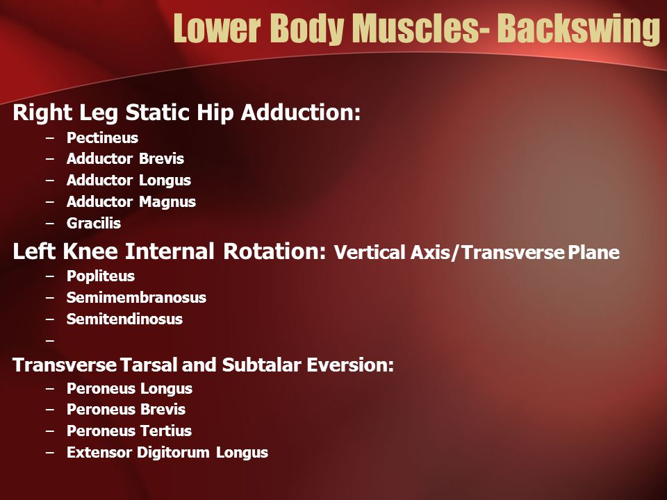 Lower Body Muscles- Backswing Right Leg Static Hip Adduction: –Pectineus –Adductor Brevis –Adductor Longus –Adductor Magnus –Gracilis Left Knee Intern