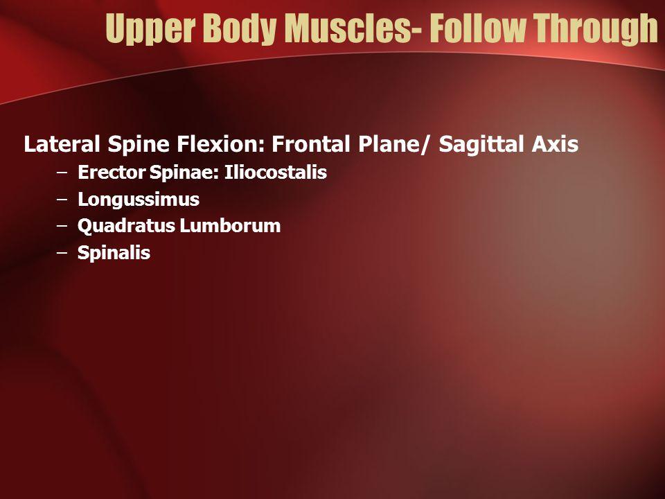 Upper Body Muscles- Follow Through Lateral Spine Flexion: Frontal Plane/ Sagittal Axis –Erector Spinae: Iliocostalis –Longussimus –Quadratus Lumborum –Spinalis