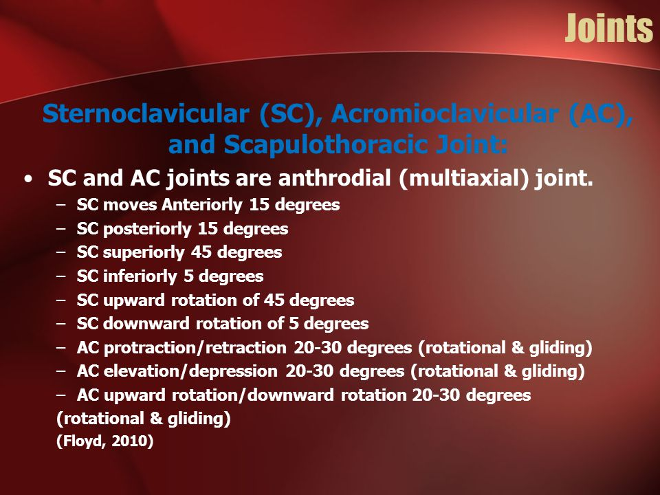 Joints Sternoclavicular (SC), Acromioclavicular (AC), and Scapulothoracic Joint: SC and AC joints are anthrodial (multiaxial) joint. –SC moves Anterio