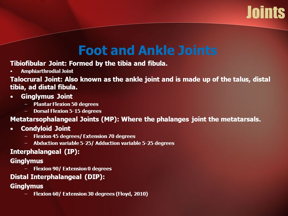 Joints Foot and Ankle Joints Tibiofibular Joint: Formed by the tibia and fibula. Amphiarthrodial Joint Talocrural Joint: Also known as the ankle joint