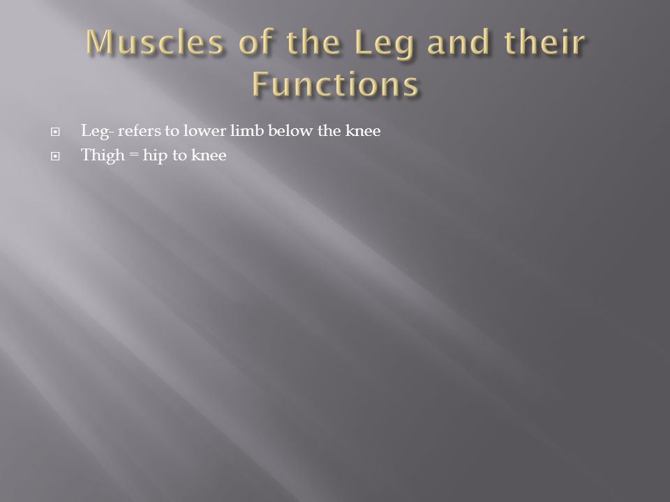  Leg- refers to lower limb below the knee  Thigh = hip to knee