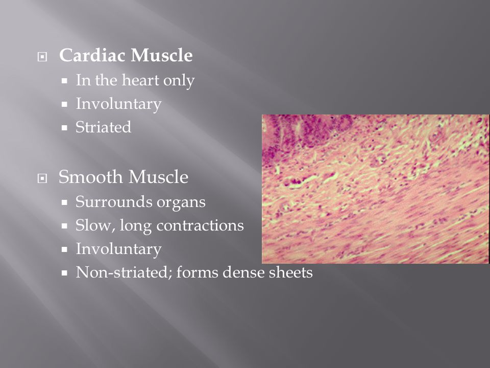  Cardiac Muscle  In the heart only  Involuntary  Striated  Smooth Muscle  Surrounds organs  Slow, long contractions  Involuntary  Non-striated; forms dense sheets