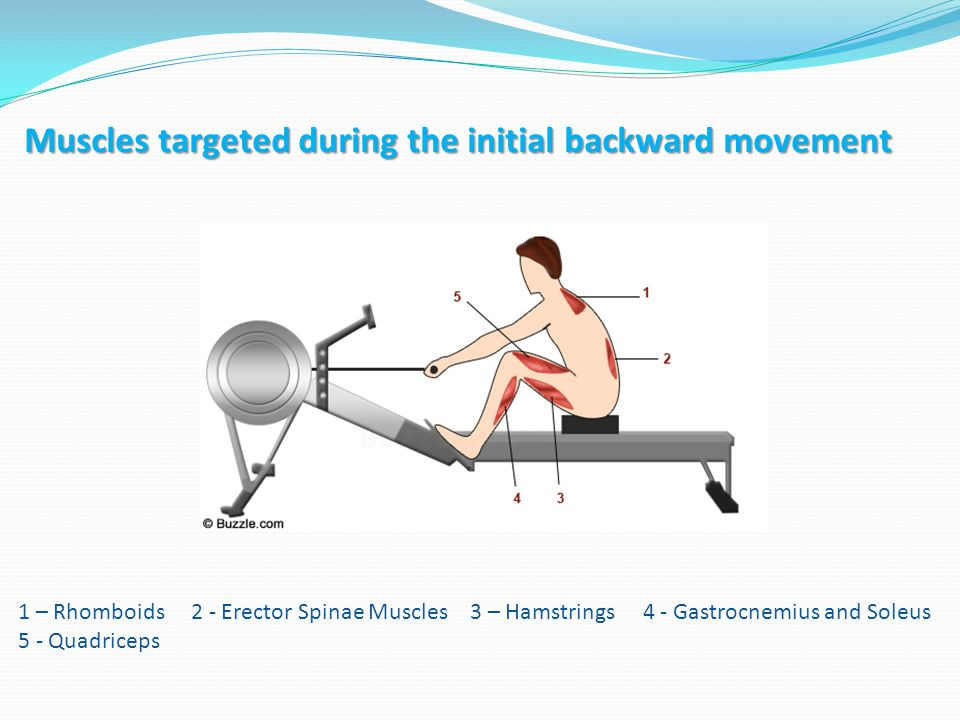 Cardiovascular Pull / Squat/ Bend Cardiovascular Pull / Squat/ Bend Muscles targeted during the initial position 1 - Erector Spinae Muscles 2 – Hamstrings 3 - Gastrocnemius and Soleus