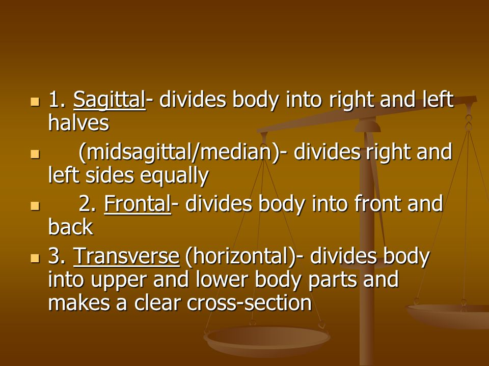 1.Sagittal- divides body into right and left halves 1.