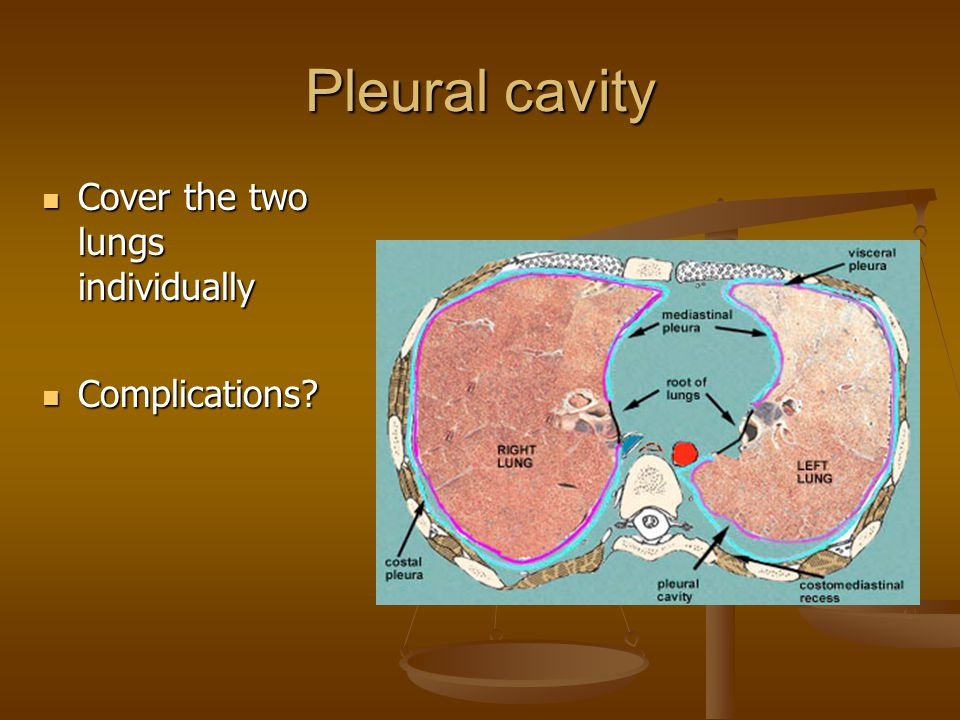 Pleural cavity Cover the two lungs individually Cover the two lungs individually Complications.