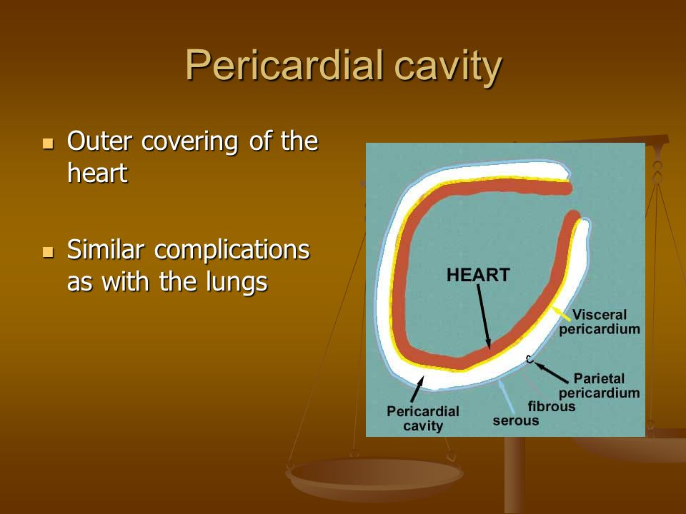 Pericardial cavity Outer covering of the heart Outer covering of the heart Similar complications as with the lungs Similar complications as with the lungs