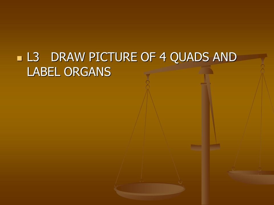 L3 DRAW PICTURE OF 4 QUADS AND LABEL ORGANS L3 DRAW PICTURE OF 4 QUADS AND LABEL ORGANS