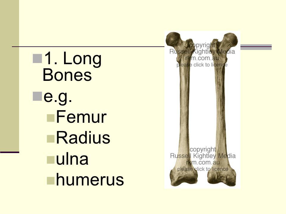 1. Long Bones e.g. Femur Radius ulna humerus