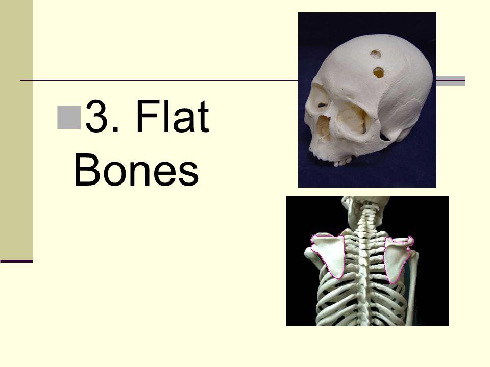 3. Flat Bones