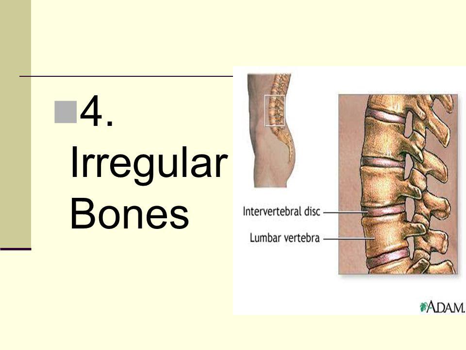 4. Irregular Bones