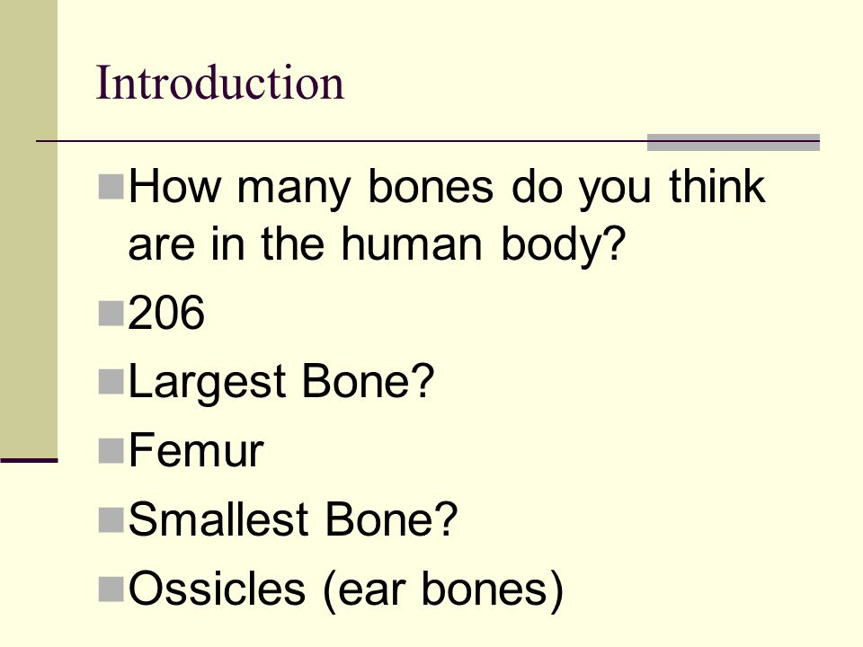 Introduction How many bones do you think are in the human body? 206 Largest Bone? Femur Smallest Bone? Ossicles (ear bones)