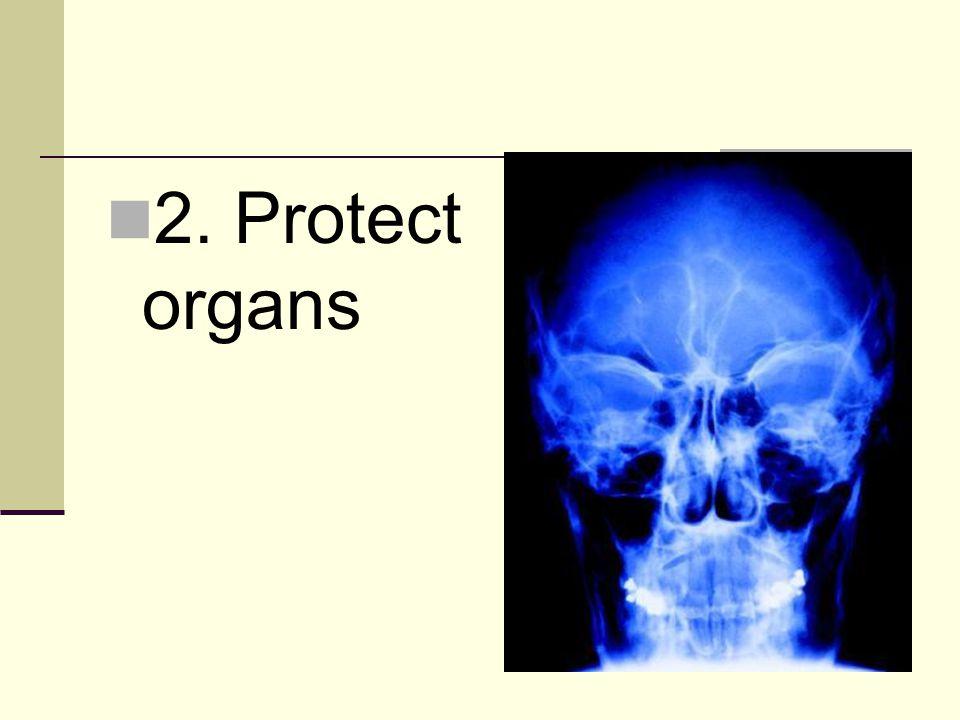 2. Protect organs