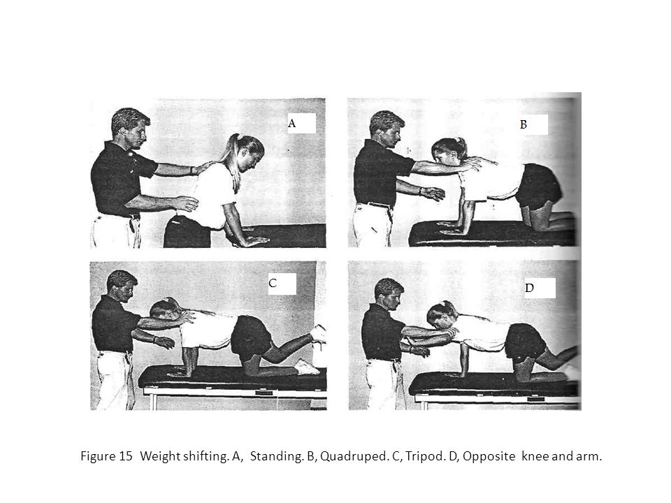 Figure 15 Weight shifting. A, Standing. B, Quadruped. C, Tripod. D, Opposite knee and arm.