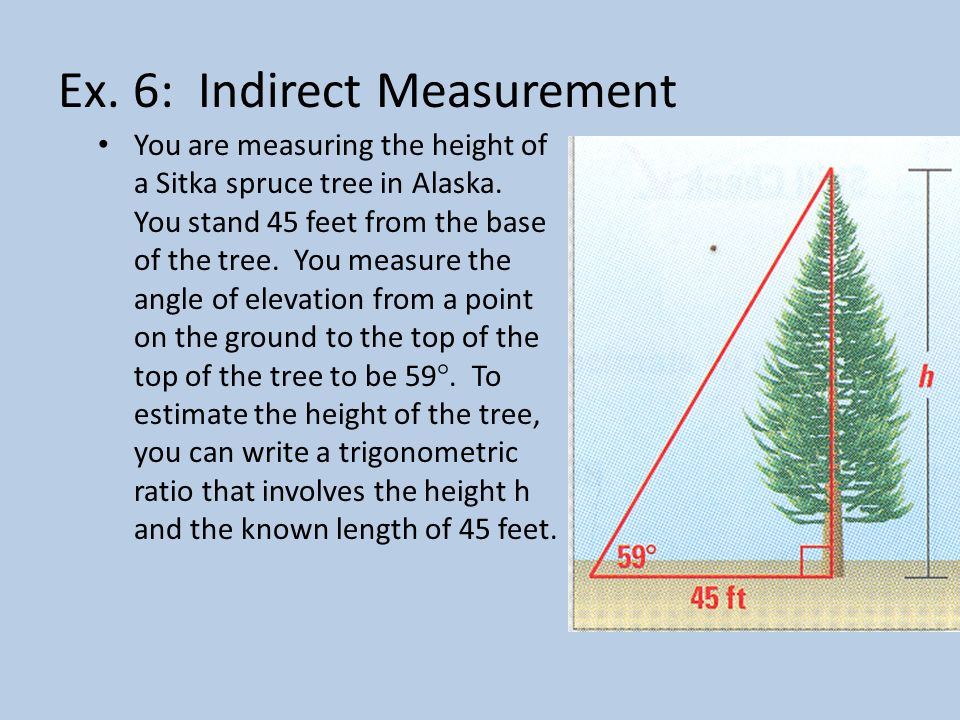 Ex.6: Indirect Measurement You are measuring the height of a Sitka spruce tree in Alaska.