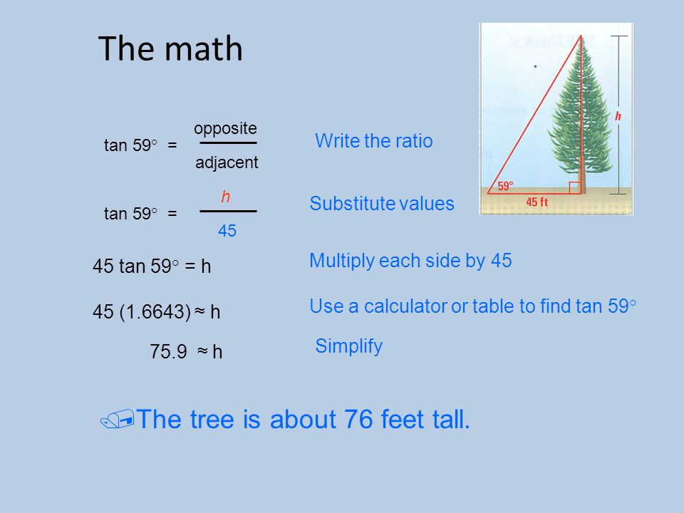 The math tan 59 ° = opposite adjacent tan 59 ° = h 45 45 tan 59° = h 45 (1.6643) ≈ h 75.9 ≈ h Write the ratio Substitute values Multiply each side by 45 Use a calculator or table to find tan 59 ° Simplify  The tree is about 76 feet tall.