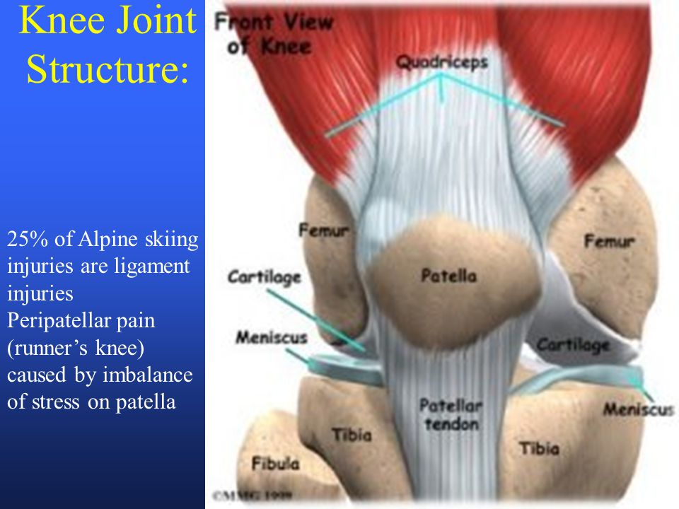 Knee Joint Structure: 25% of Alpine skiing injuries are ligament injuries Peripatellar pain (runner's knee) caused by imbalance of stress on patella