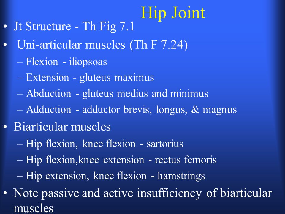Hip Joint Jt Structure - Th Fig 7.1 Uni-articular muscles (Th F 7.24) –Flexion - iliopsoas –Extension - gluteus maximus –Abduction - gluteus medius and minimus –Adduction - adductor brevis, longus, & magnus Biarticular muscles –Hip flexion, knee flexion - sartorius –Hip flexion,knee extension - rectus femoris –Hip extension, knee flexion - hamstrings Note passive and active insufficiency of biarticular muscles