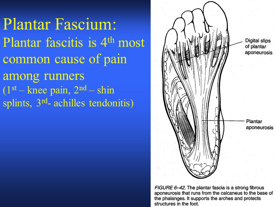 Plantar Fascium: Plantar fascitis is 4 th most common cause of pain among runners (1 st – knee pain, 2 nd – shin splints, 3 rd - achilles tendonitis)