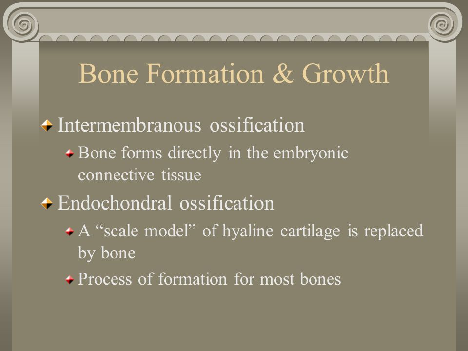 A Closer Look at Endochondral Ossification and Growth 1.