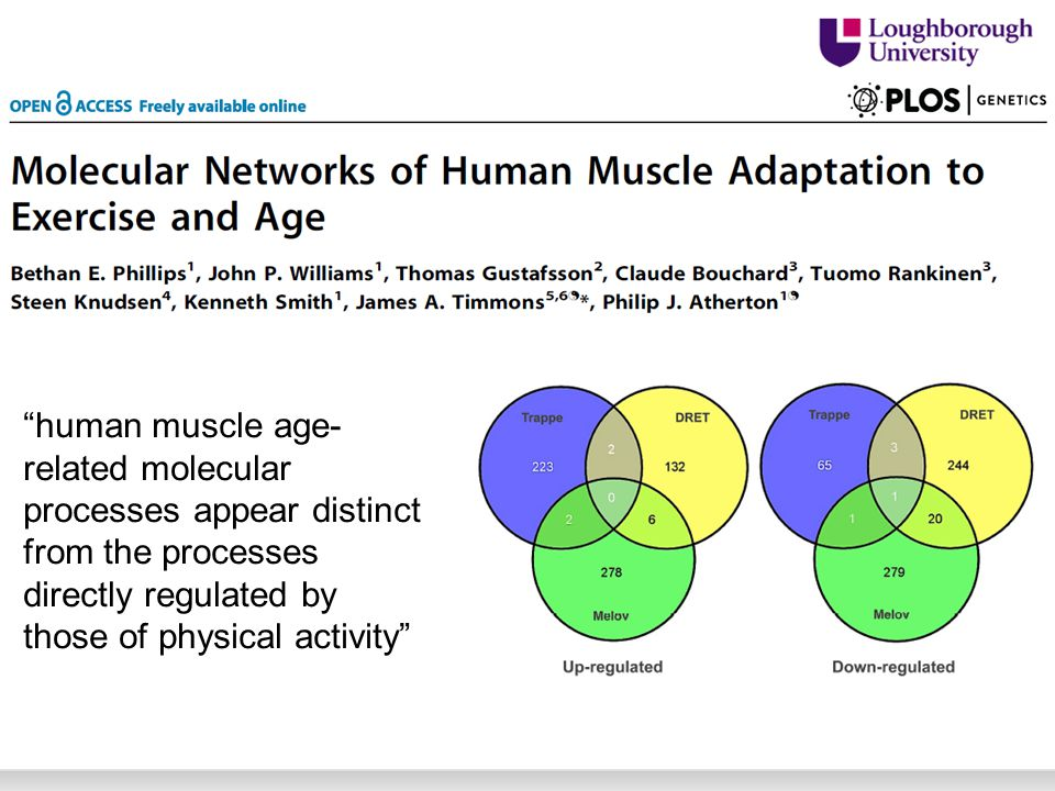 human muscle age- related molecular processes appear distinct from the processes directly regulated by those of physical activity