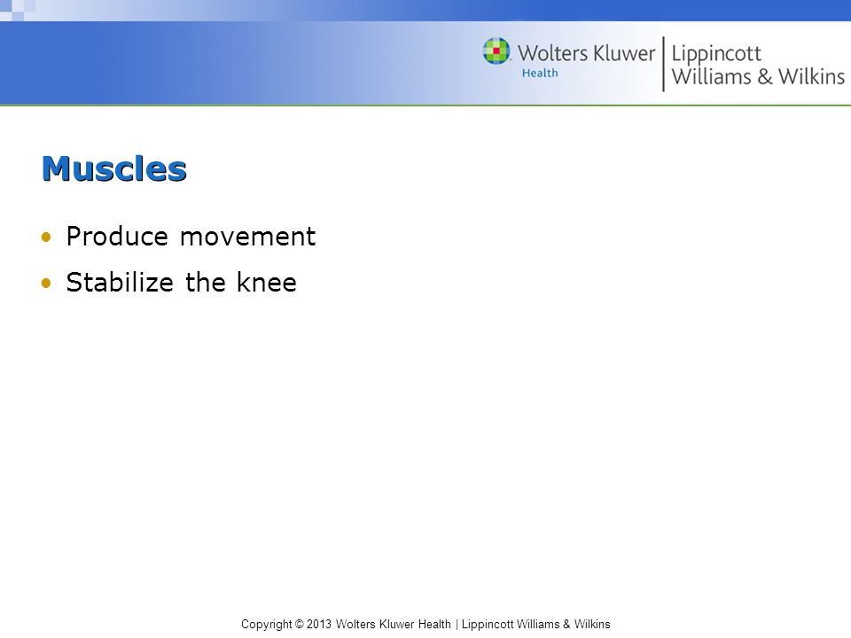 Muscles Produce movement Stabilize the knee