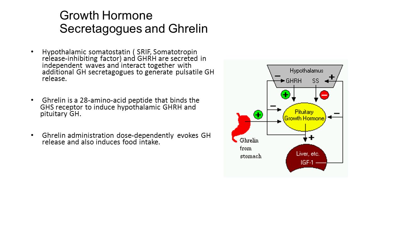 Growth Hormone Secretagogues and Ghrelin Hypothalamic somatostatin ( SRIF, Somatotropin release-inhibiting factor) and GHRH are secreted in independen
