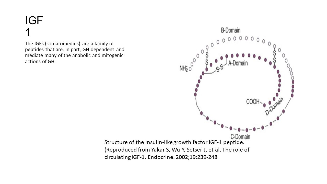 IGF 1 The IGFs (somatomedins) are a family of peptides that are, in part, GH dependent and mediate many of the anabolic and mitogenic actions of GH. S