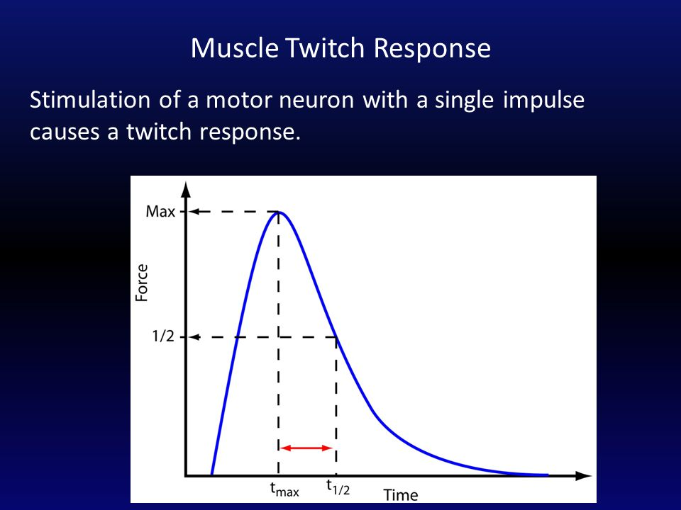 Stimulation of a motor neuron with a single impulse causes a twitch response. Muscle Twitch Response