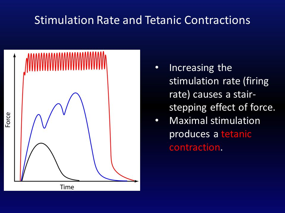 Increasing the stimulation rate (firing rate) causes a stair- stepping effect of force. Maximal stimulation produces a tetanic contraction. Stimulatio
