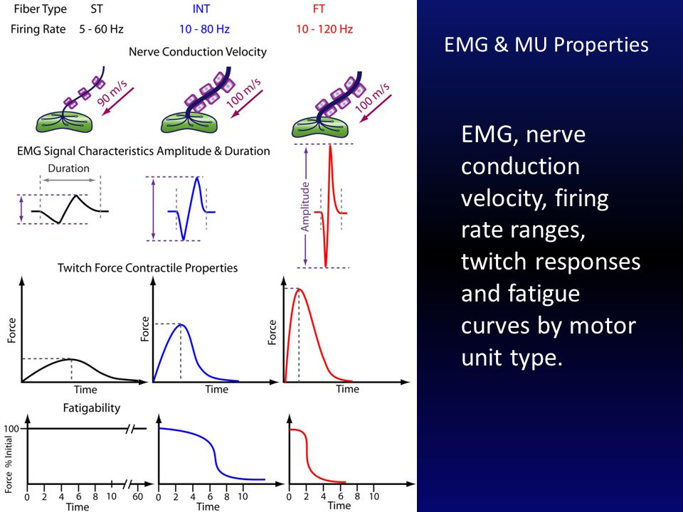 EMG, nerve conduction velocity, firing rate ranges, twitch responses and fatigue curves by motor unit type.